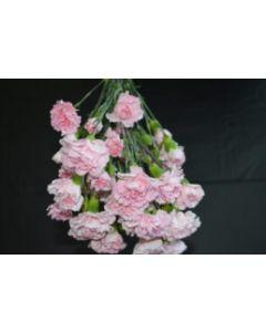 Mini Carnations Bunch